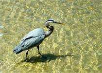 Snug Harbor Bird Image